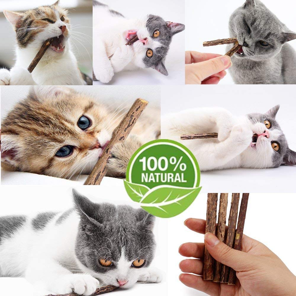The Silvervine Sticks For Cats 1