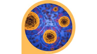 How do B Cells Work mini